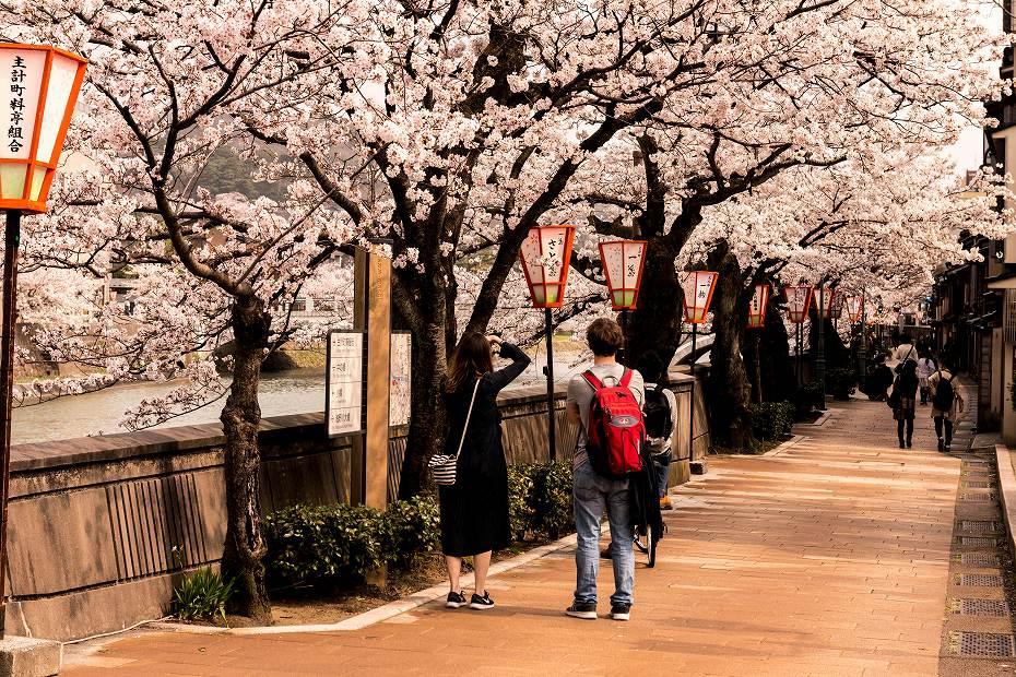 2018.04.02 主計町の桜 1