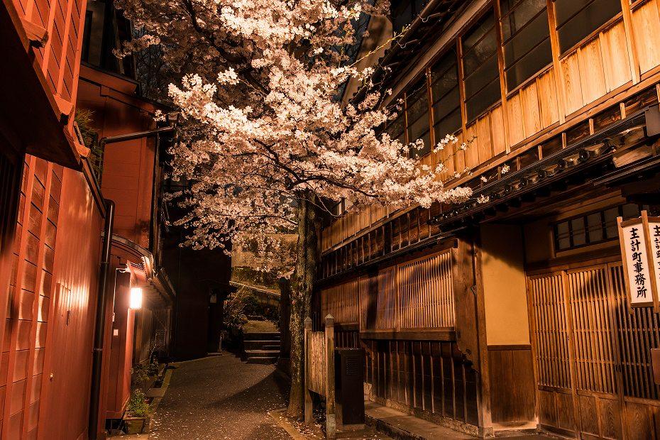 2018.04.03 主計町の夜桜 1