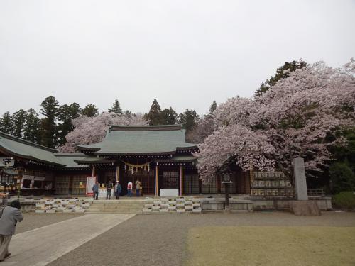 「桜」満開かな?