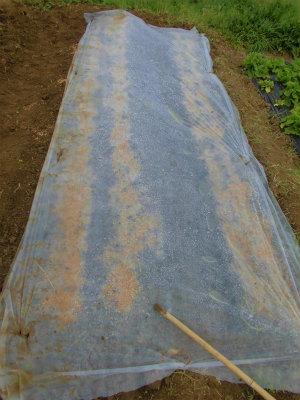 4.5ニンジン、牛蒡の乾燥防止
