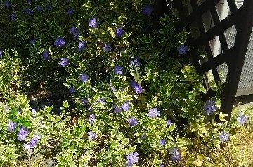 紫の花DSC_0373