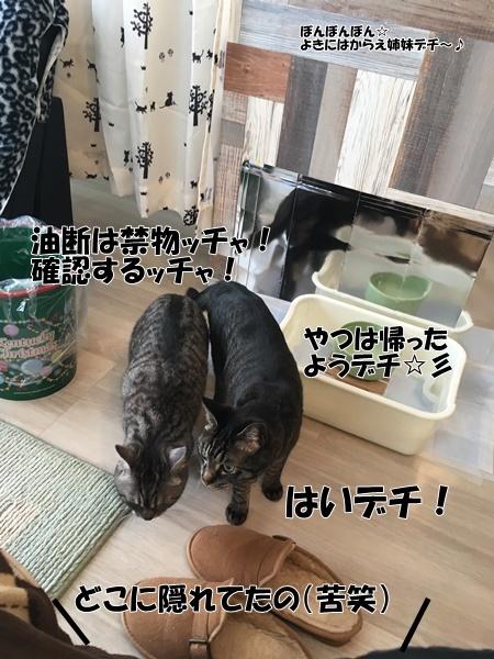 IMG_あふれこ
