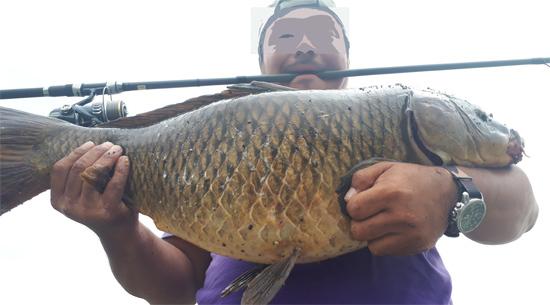 フローター鯉 14kg