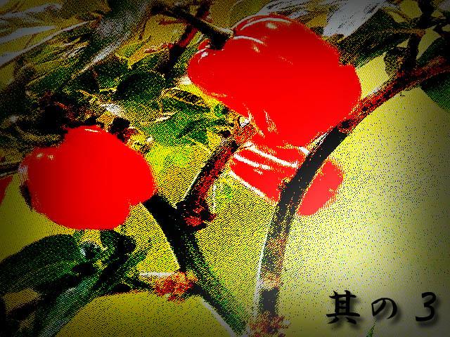 habanero_red_Profit_3_01.jpg