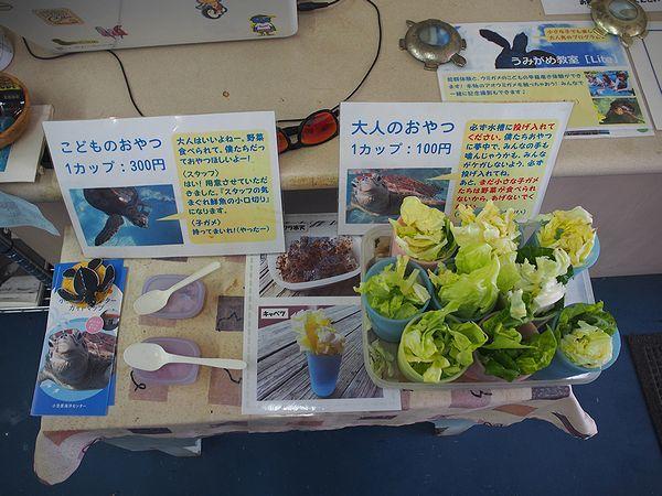 亀の餌@小笠原海洋センター