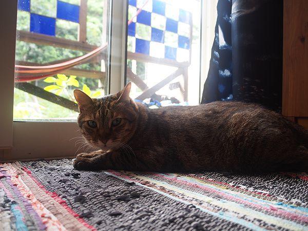 海渡の看板猫