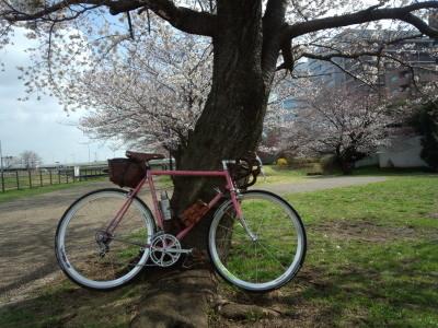 桜デローザ