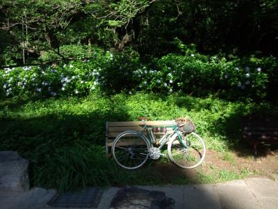 三ツ池公園 紫陽花
