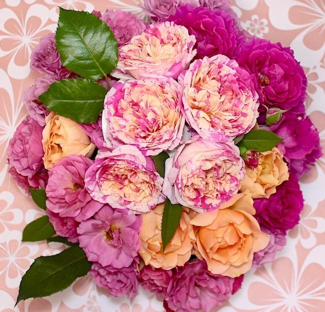 2018-0519-rose-pink01.jpg