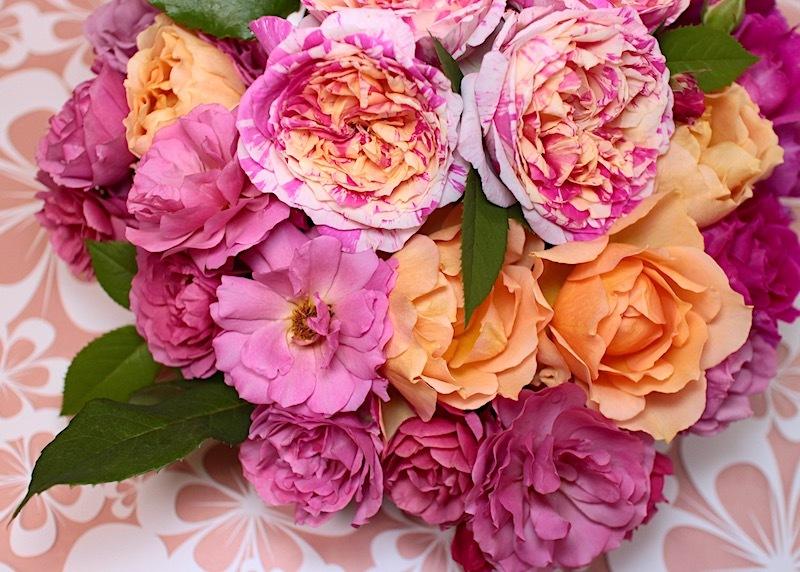 2018-0519-rose-pink02.jpg