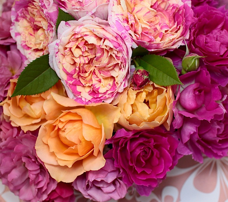 2018-0519-rose-pink03.jpg
