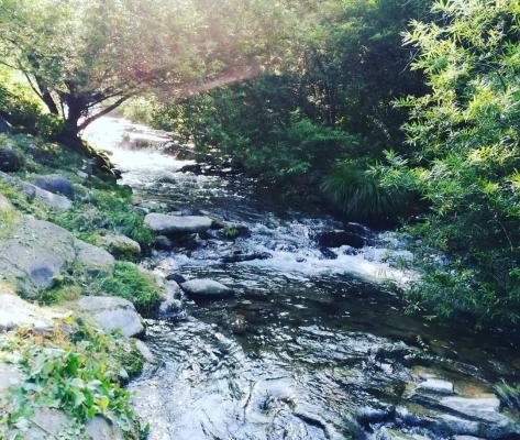 渓谷の上流へ①