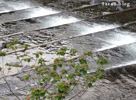 ちょっと散歩 川を眺めると ドラクエを思い出す 1