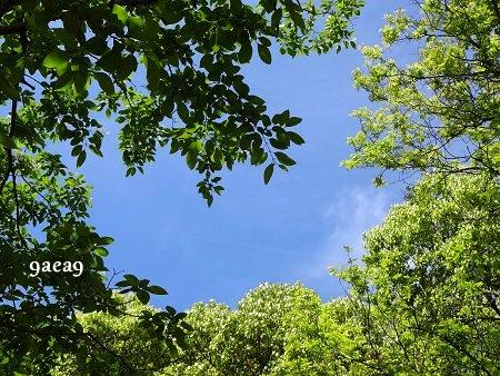 空は青い 新緑 樹々