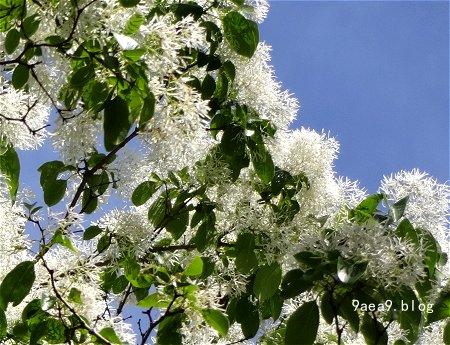 この白い花 可愛い