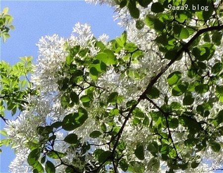 この白い花 可愛い2