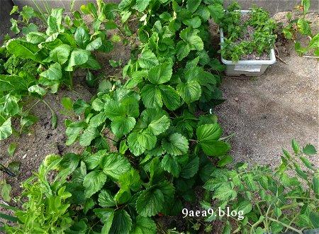 家庭菜園が出来る庭付きの賃貸も魅力的 1