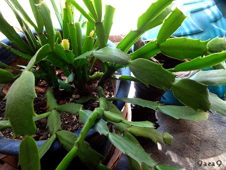 実家の植物