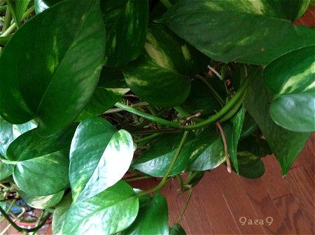 実家の植物2