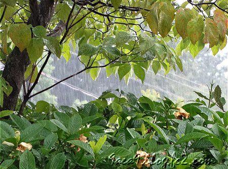 雨 の 日 1