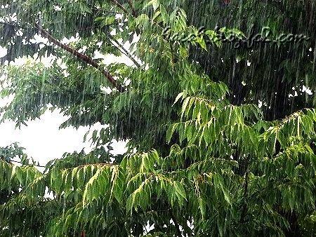 雨 の 日 3