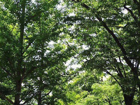 緑 新緑 風景 田舎 1