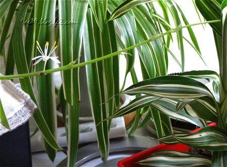 観葉植物がテーブルの中央に置いてある 花が咲いてたわ 2