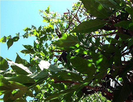 屋根に茂る緑2