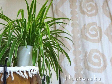 NANTONAKU ミニマルでも植物に癒やされる生活は有りだよね2