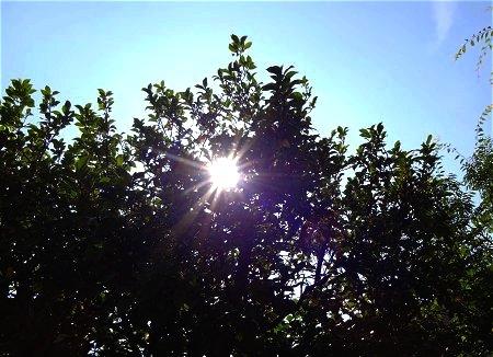 暑い まぶしい 太陽