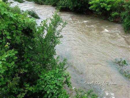 大雨で 川の水かさが増して 鴨の親子が(ΦωΦ)きゃあ 1