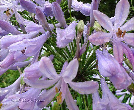 雨の中で撮影 花の名前はわからない 2