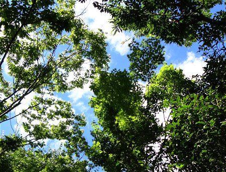 新緑の頃とは全く違う 夏の樹々 1