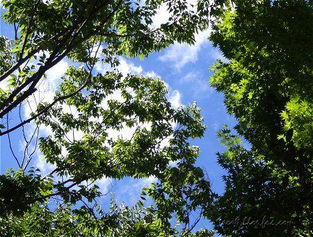 新緑の頃とは全く違う 夏の樹々 2