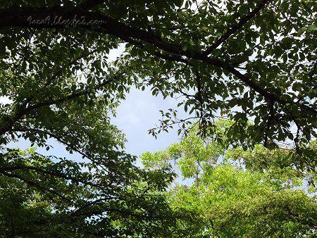 外出先の樹々 緑