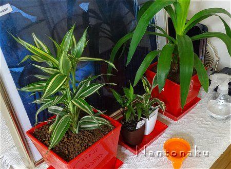 NANTONAKU 観葉植物 3