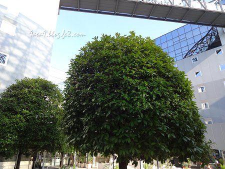 京都駅ビルの中の緑 2