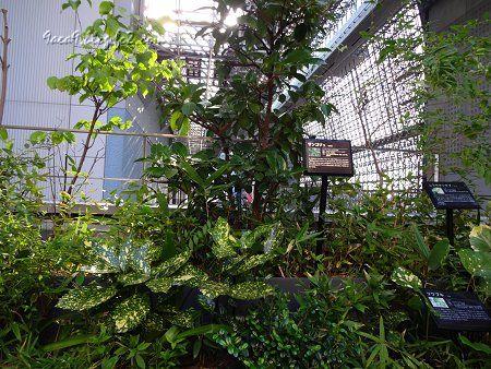京都駅ビルの中の緑 3