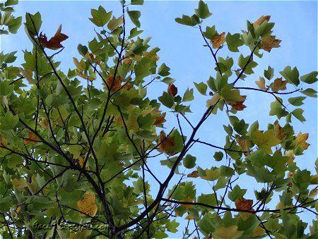8月なのに急に秋っぽい 2