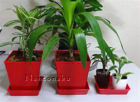 NANTONAKU おすすめダイソー植木鉢