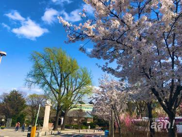 ソウルにやってきた春!