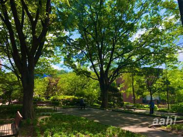 森のようですが大学内です(笑)こんな森の中で勉強するものよいかも?