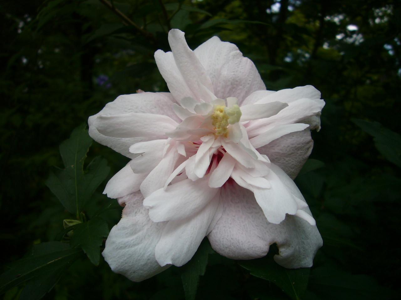 妖しい花弁