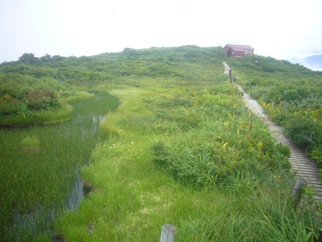赤兎小屋付近の湿原 H30.7.28