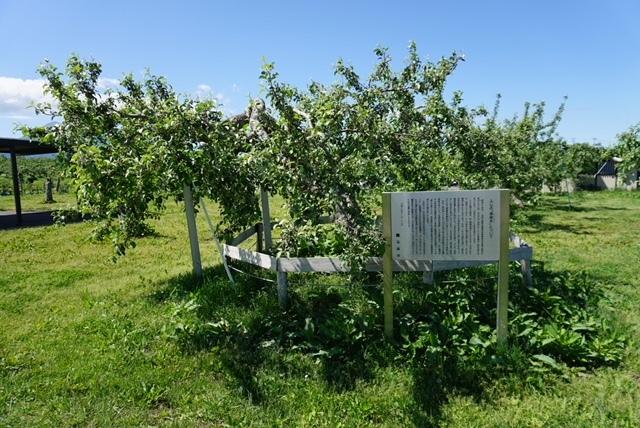 0526リンゴ公園3