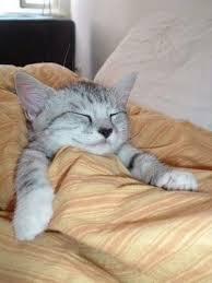 おやすみ④