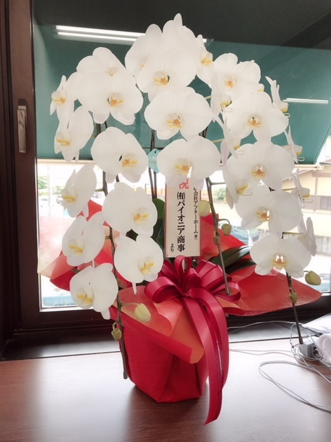 お花!パイオニア商事様より