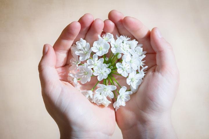 hand-blossom-plant-white-photography-flower-636225-pxhere-com.jpg