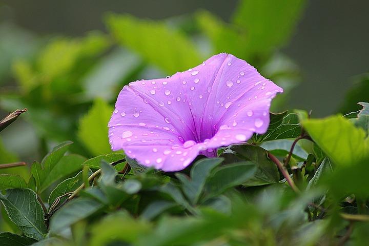 nature-blossom-plant-stem-leaf-flower-1120020-pxhere-com.jpg