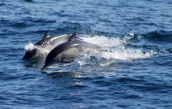 sea-water-nature-ocean-wildlife-splash-655697-pxhere-com.jpg